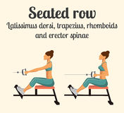 Gym Exercise: Seated Row. Vector Illustration Royalty Free Stock Photos