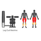 Gym leg curl machine Stock Image