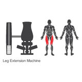 Gym leg extension machine Stock Image
