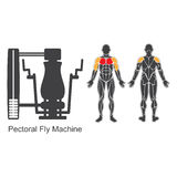 Gym pectoral fly machine Royalty Free Stock Image
