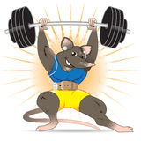 Gym Rat Royalty Free Stock Photos