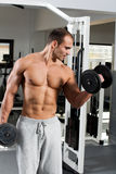 Gym training. Young bodybuilder training in the gym - dumbbell alternate biceps curl Royalty Free Stock Photography