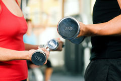 Gym training with dumbbells Royalty Free Stock Photos