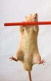 The gymnast Stock Photo