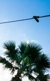 Gymnastikskor startar att hänga på en tråd ovanför palmträdet Royaltyfri Bild