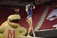 2015 gymnastique de dames de NCAA - WVU Photo stock