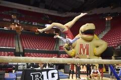 2015 gymnastique de NCAA - le Maryland Photos libres de droits