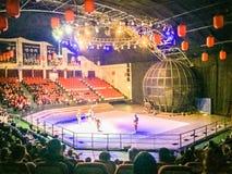 Gymnastiska shower för Jeju cirkusvärld Arkivbilder
