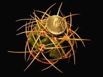 Gymnocalycium仙人掌和硬币 免版税库存图片