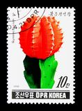 Gymnocalycium sp, Cacti serie, circa 1990. MOSCOW, RUSSIA - NOVEMBER 25, 2017: A stamp printed in Democratic People's republic of Korea shows Gymnocalycium Stock Image