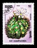Gymnocalycium valnicekianum,仙人掌serie,大约1986年 库存图片