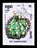 Gymnocalycium valnicekianum,仙人掌serie,大约1986年 免版税图库摄影