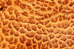 Gymnopilus junonius鳞状盖帽表面宏指令或者壮观的Rustgill 库存照片