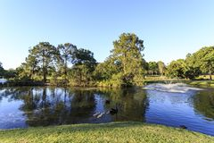Gympie - lago Alford Recreation Park imagem de stock