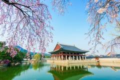 Gyongbokgung pałac z czereśniowym okwitnięciem w wiośnie, Korea Zdjęcie Stock