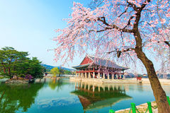 Gyeongbokgung Palace with cherry blossom in spring,Korea Royalty Free Stock Photography