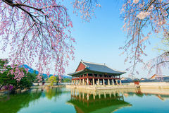 Gyongbokgung slott med den körsbärsröda blomningen i våren, Korea Arkivfoto