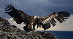 Gyps, die Berge fliegen Stockfotografie