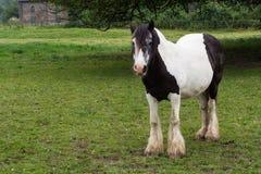 Gypse häst Fotografering för Bildbyråer