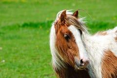 Gypsies horse Stock Photo