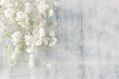 Gypsophila (λουλούδια μωρό-αναπνοής), ελαφριές, αερώδεις μάζες των μικρών άσπρων λουλουδιών Στοκ εικόνα με δικαίωμα ελεύθερης χρήσης