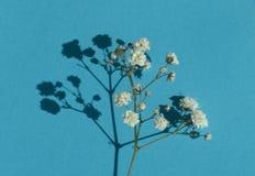 Gypsophila & x28; Baby& x27; flowers& x29 del s-respiro; , luce, masse aerate di piccolo Fotografia Stock Libera da Diritti