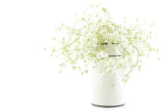 Gypsophila (Baby's-breath flowers), light, airy masses of small white flowers, process high key. Royalty Free Stock Images