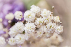 Gypsophila Stock Image
