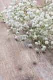 Gypsophila Royalty Free Stock Photo