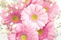 gypsophila de gerbera de bouquet Image stock