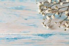 Gypsophila de la ramita del pequeño primer de las flores blancas en fondo de madera lamentable azul fotos de archivo