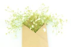 Gypsophila (fleurs de Bébé-souffle) dans l'enveloppe Image libre de droits