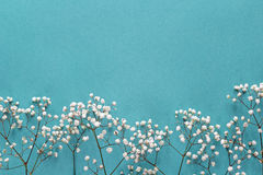 Gypsophila flowers frame on blue background from above. Flat lay