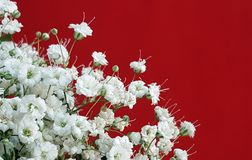 Gypsophila flowers. Postcard