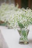 Gypsophila. Flowers Gypsophila in white vase Stock Photo