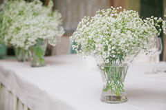 Gypsophila. Flowers Gypsophila in white vase Stock Photography