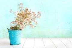 Gypsophila i metallhink i turkos framme av ljust - grön vägg fotografering för bildbyråer