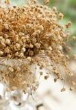 Gypsophila seco fotos de stock