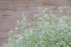 Gypsophila white flowers on wooden background. Million star, (Baby's-breath) flowers is a small headed white Gypsophila flowers on wooden background Stock Photo