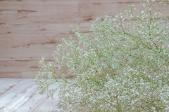 Gypsophila white flowers on wooden background. Million star, (Baby's-breath) flowers is a small headed white Gypsophila flowers on wooden background Stock Photography