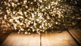 Gypsophila on wooden Stock Photos