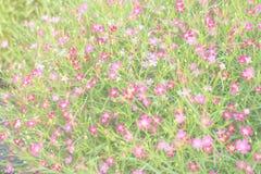 Gypsophilablumen-Unschärfehintergrund lizenzfreie stockfotografie