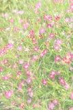 Gypsophilablumen-Unschärfehintergrund stockfotografie