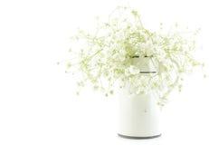Gypsophilaen (brudslöjablommor), ljus, luftiga mass av små vita blommor, bearbetar höjdpunkttangent Royaltyfria Bilder