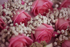 Gypsophilla and pink roses Royalty Free Stock Photos