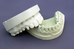 Gypsum model Stock Images