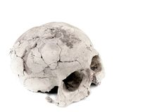 Gypsum model of human cranium Stock Images