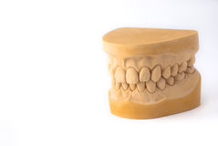 Gypsum model plaster of tooth Royalty Free Stock Images