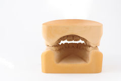 Gypsum model plaster of tooth Stock Photography