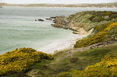 Gypsy Cove - Falkland Islands Royalty Free Stock Image